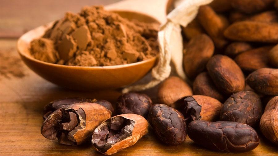 Premian a científica mexicana en Europa por demostrar beneficios del chocolate a nivel muscular en la tercera edad
