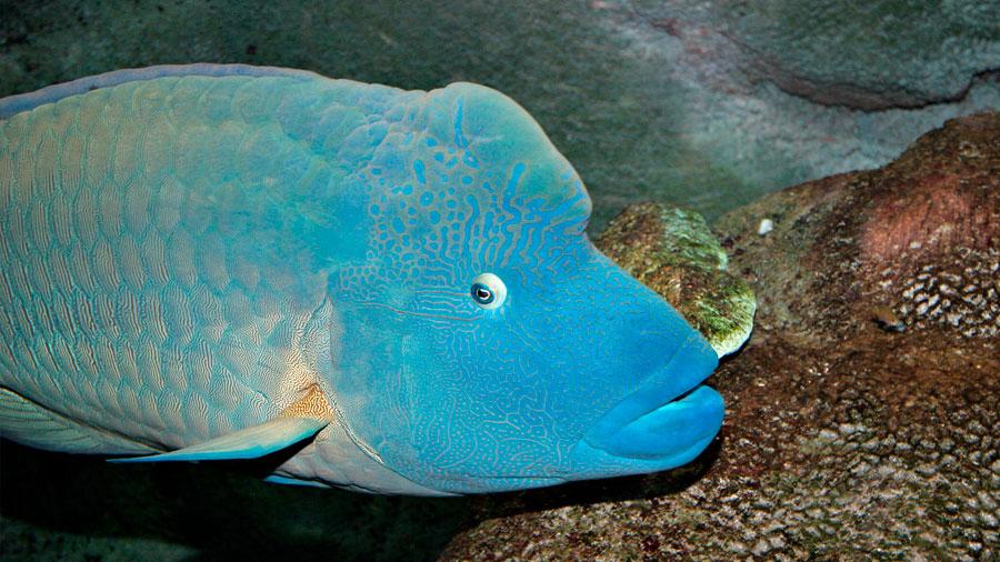 El ruido de los barcos altera la conducta de los peces limpiadores