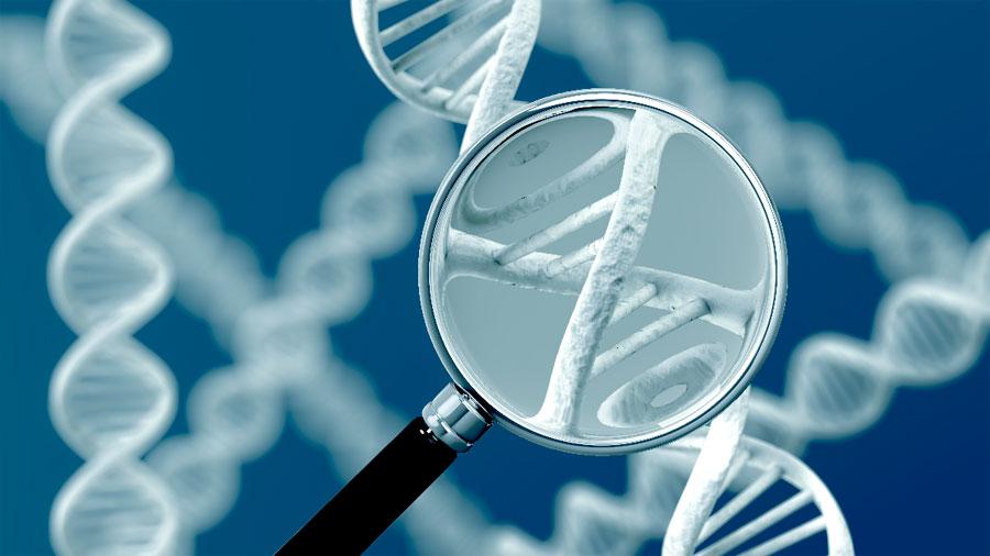 Descubren 14 mutaciones que reducen la expectativa de vida