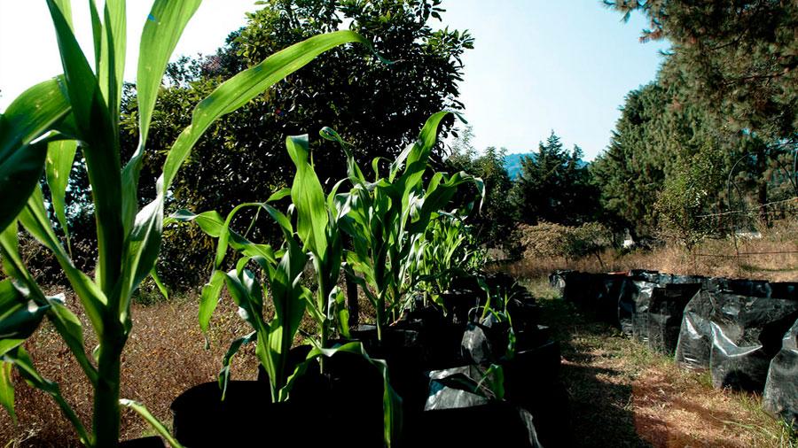 Universitarios crean técnica de cultivo contra el hambre que ya beneficia a 1500 familias