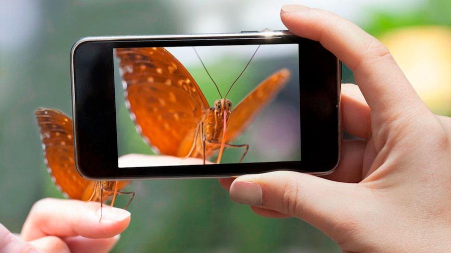 iNaturalist: la app para los amantes de la naturaleza que te permite reconocer cualquier especie silvestre