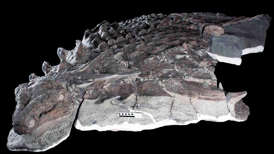 El fósil de un dinosaurio en excelentes condiciones revela a un herbívoro con posibles habilidades de camuflaje