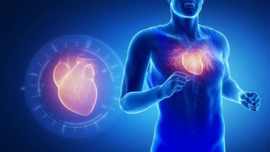 La proteína que imita los efectos del ejercicio físico en el corazón
