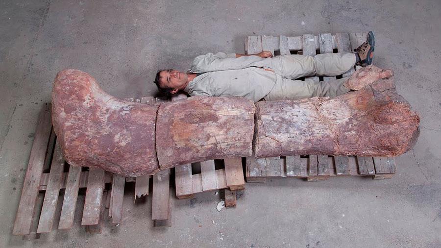 Paleontólogos argentinos dan a conocer al dinosaurio más grande de todos los tiempos