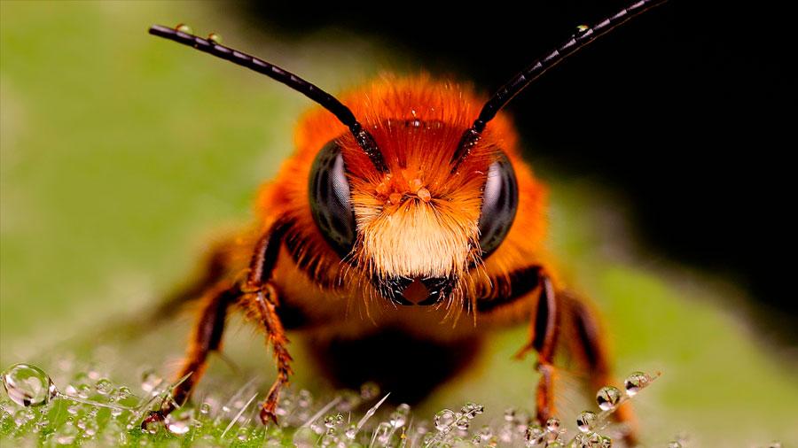 Las abejas conciben el cero como un número