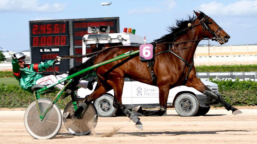 Valoran genéticamente a los caballos según su capacidad para competir