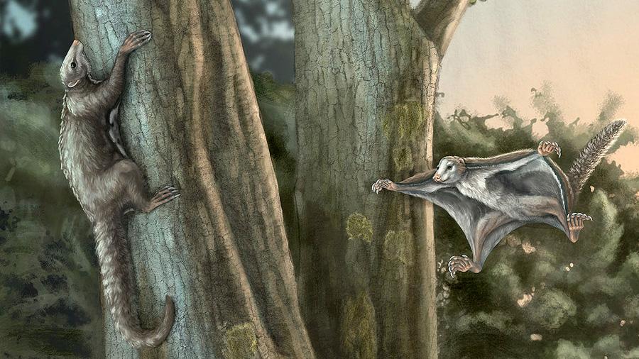 Así eran los primeros mamíferos que planeaban entre dinosaurios