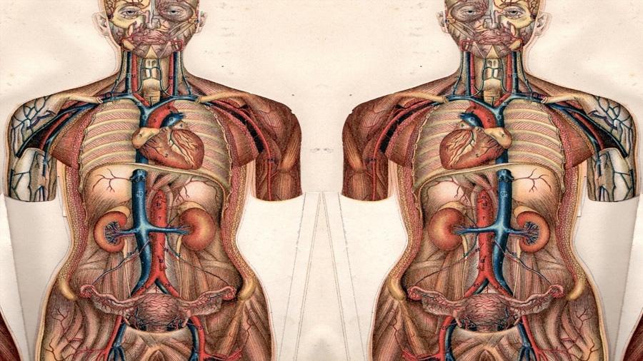 'Situs inversus', la anomalía que hace que los órganos estén colocados al revés