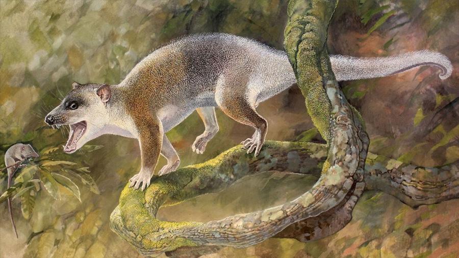 Un carnívoro cenozoico de Turquía puede haber evolucionado sin competidores placentarios
