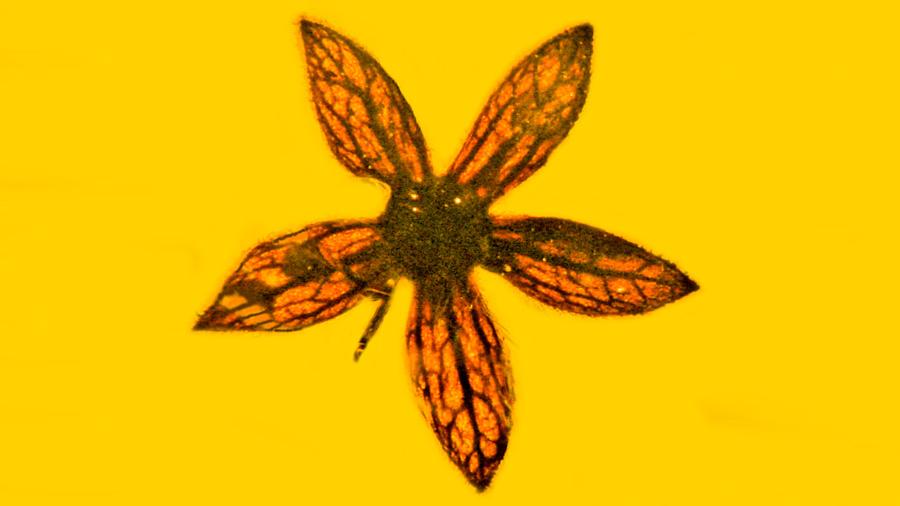 Siete flores de 100 millones de años halladas en perfecto estado de conservación