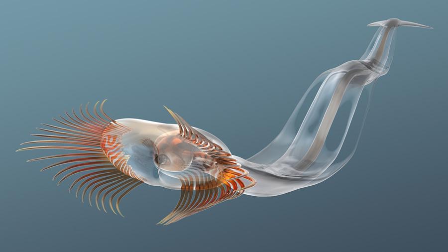 El extraño gusano marino que atrapaba presas mediante las espinas de su cabeza