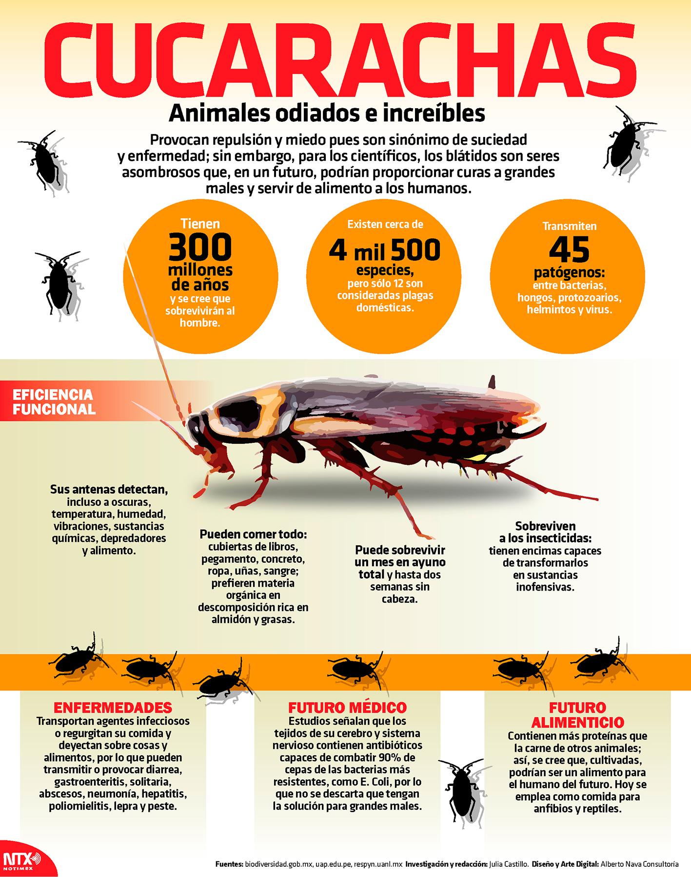 Cucarachas, animales odiados e increibles
