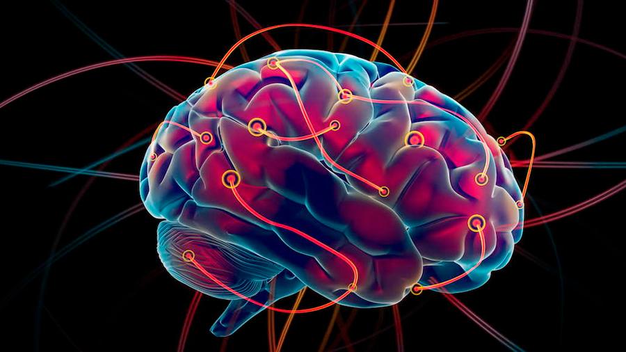 Científicos logran controlar movimientos corporales estimulando el cerebro remotamente