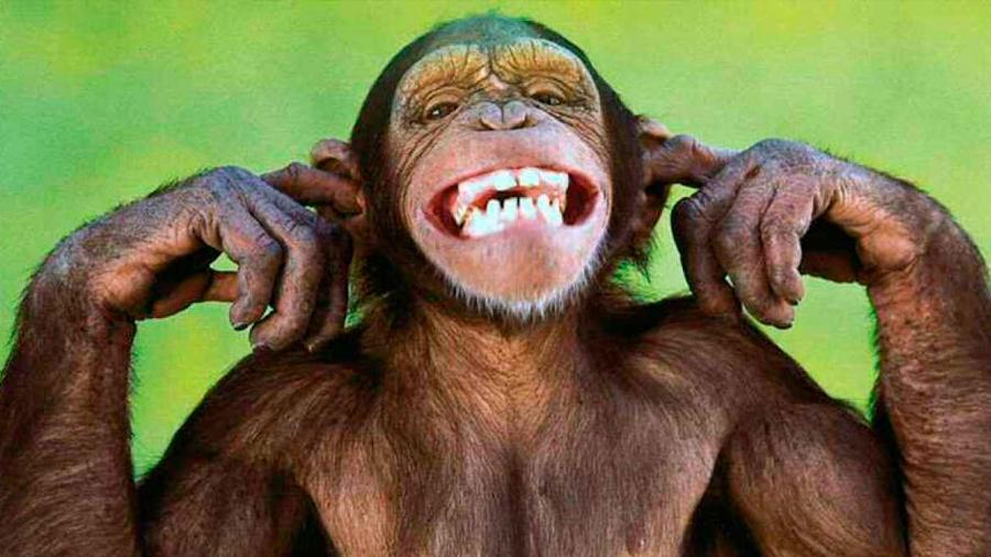 Los chimpancés y los niños humanos imitan espontáneamente las acciones del otro y de manera similar