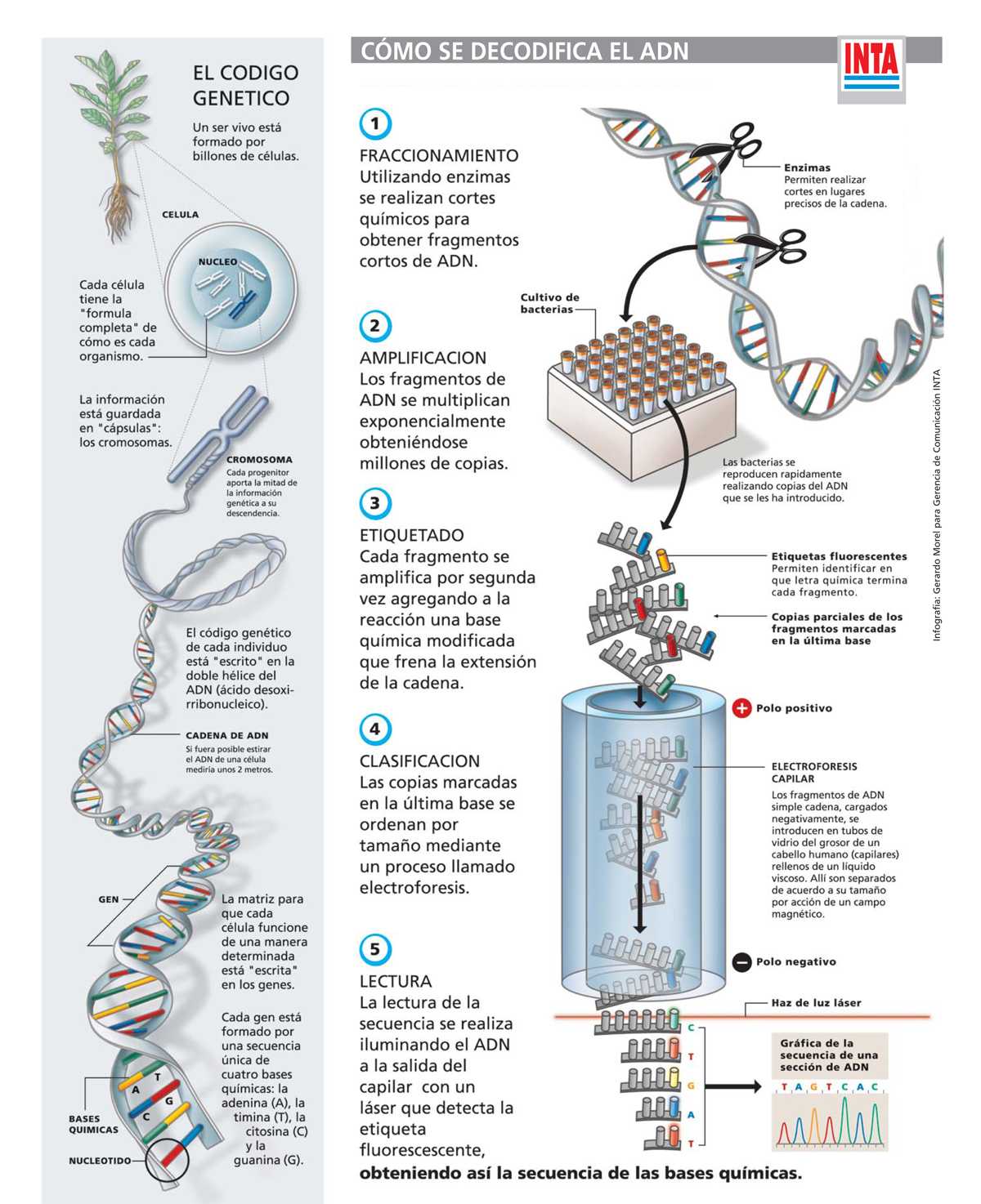 Cómo se decodifica el ADN