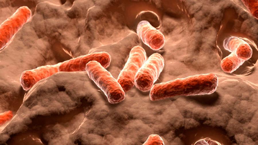 Un análisis genético revela que el 99% de los microbios que viven en nuestro organismo no están catalogados