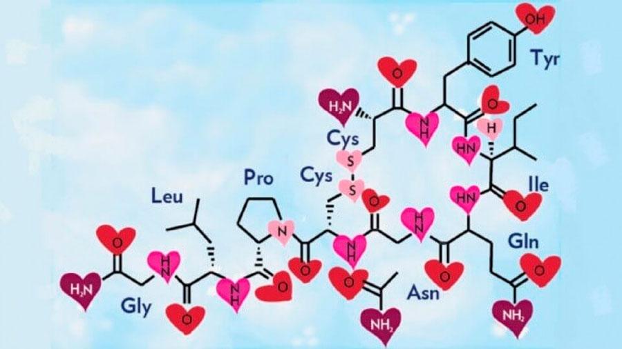Cómo la hormona del amor disminuye el odio al extranjero