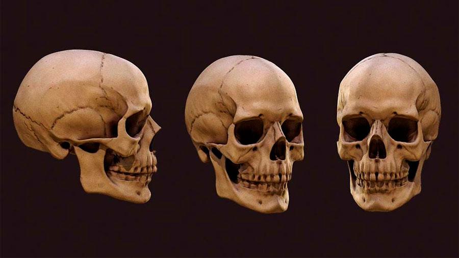 El cráneo humano cambió con la alimentación rica en productos lácteos