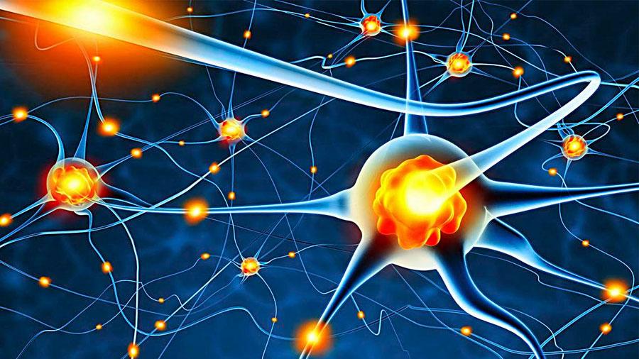 Un trasplante de neuronas fabricadas a partir de la piel mejora el párkinson