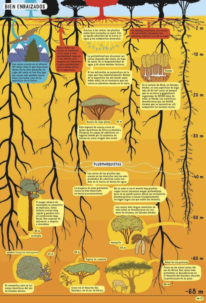 Un árbol del desierto tiene las raíces más profundas: 68 metros