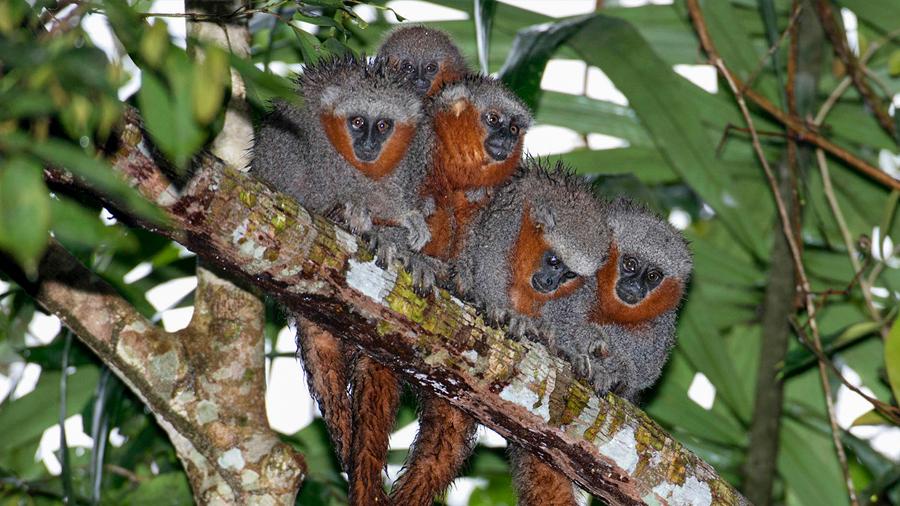 En dos años se descubrieron casi 400 nuevas especies en la Amazonía