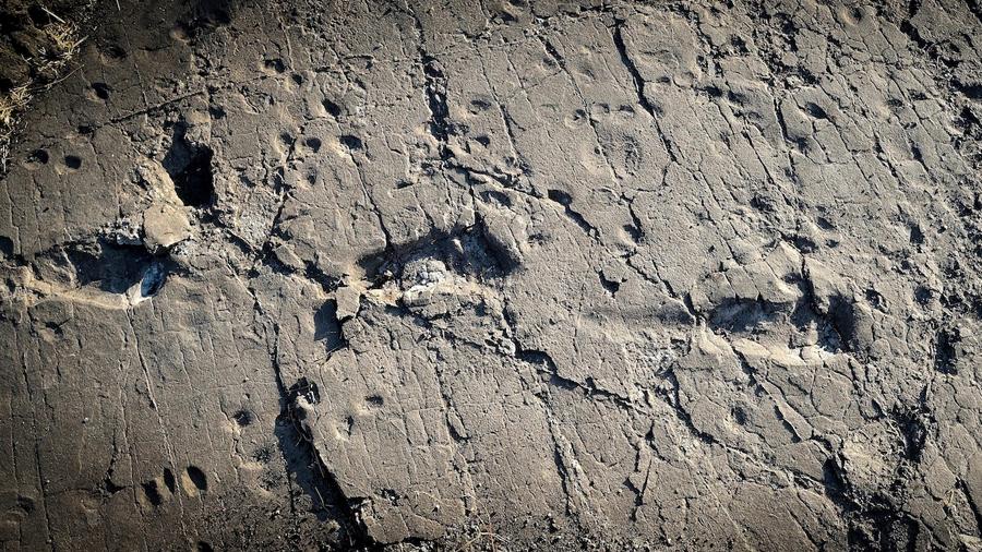 Huellas de 5.7 millones de años desafían la teoría evolutiva humana