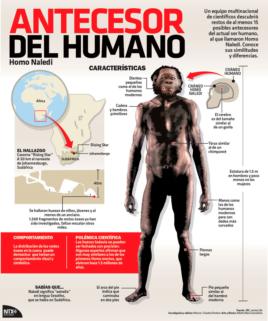 Antecesor del humano