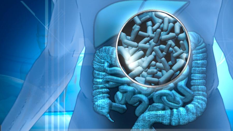 A los microbios del estómago también les afectan los cambios de sueño