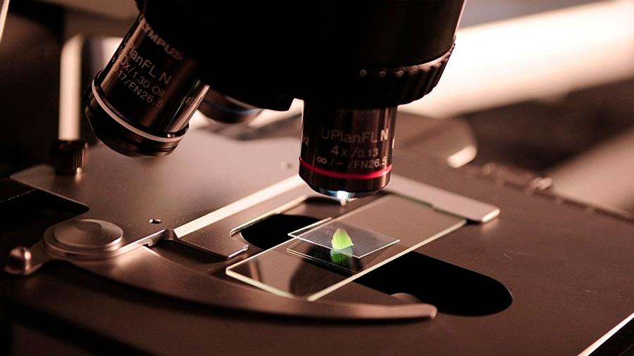 Crean un innovador microscopio para ver por fuera y por dentro