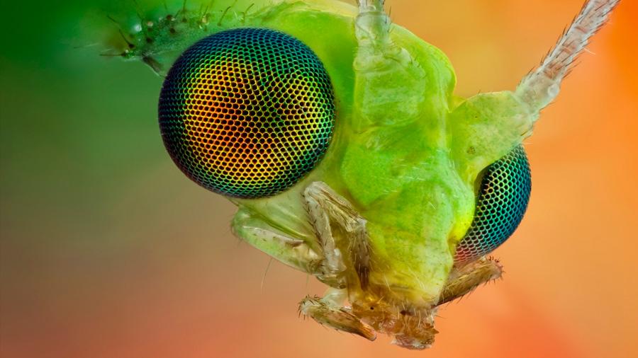 Los ojos de los insectos también operan en alta resolución