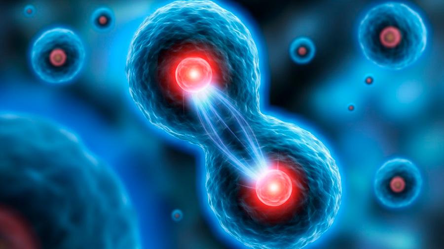 Descrita una nueva proteína clave en la regulación de la división celular