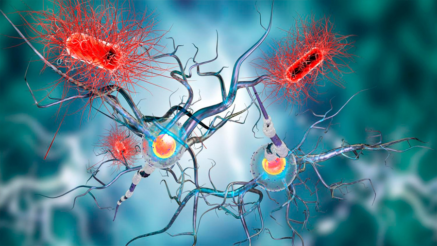 """Descubrieron cómo se produce el """"error"""" en el organismo que desencadena una enfermedad autoinmune"""