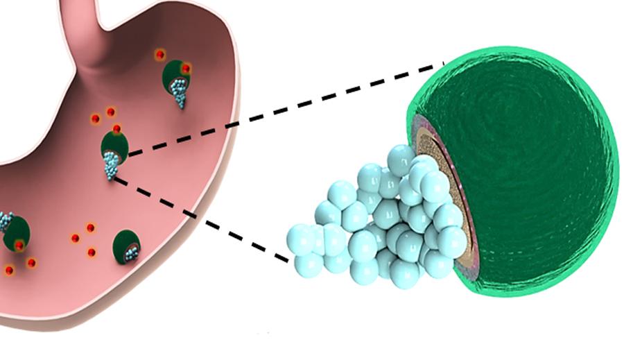 Micromotores dentro del estómago para aplicar fármacos contra una infección bacteriana