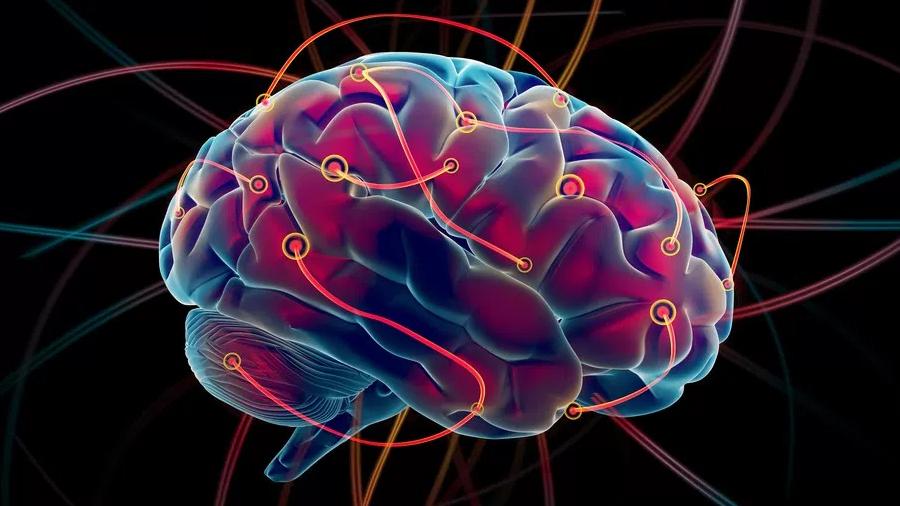 Los diez mitos del cerebro
