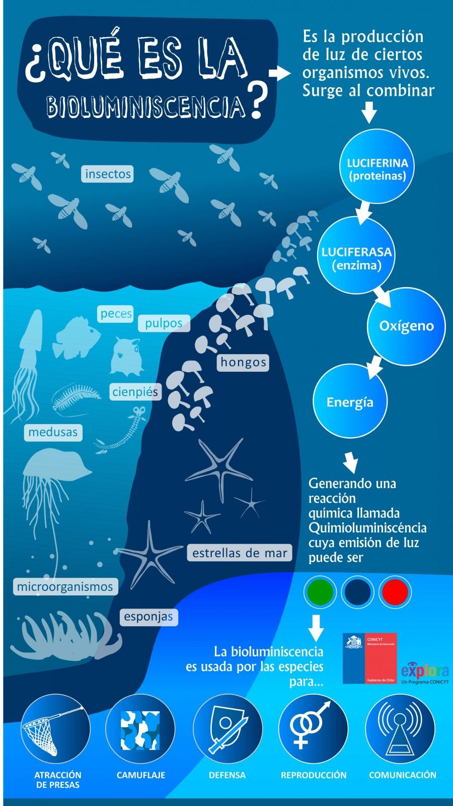 ¿Qué es la biolomuniscencia?