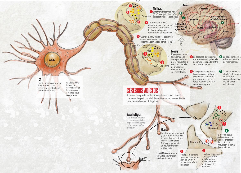 Cerebros adictos