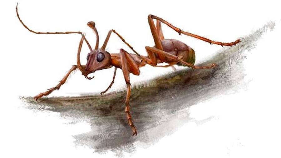 Esta hormiga vampiro usaba sus mandíbulas para empalar a sus presas en un cuerno de metal y beber su sangre