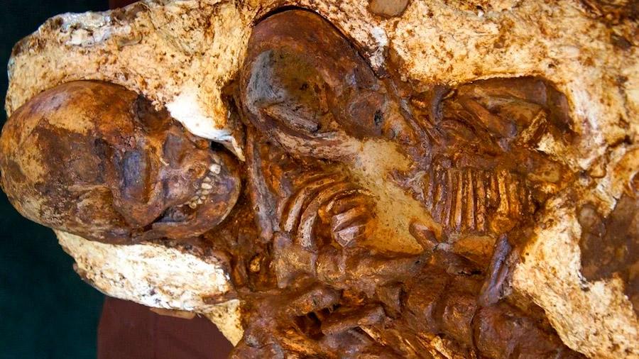Descubren un increíble fósil de una madre de 4.800 años de antigüedad acunando a su bebé