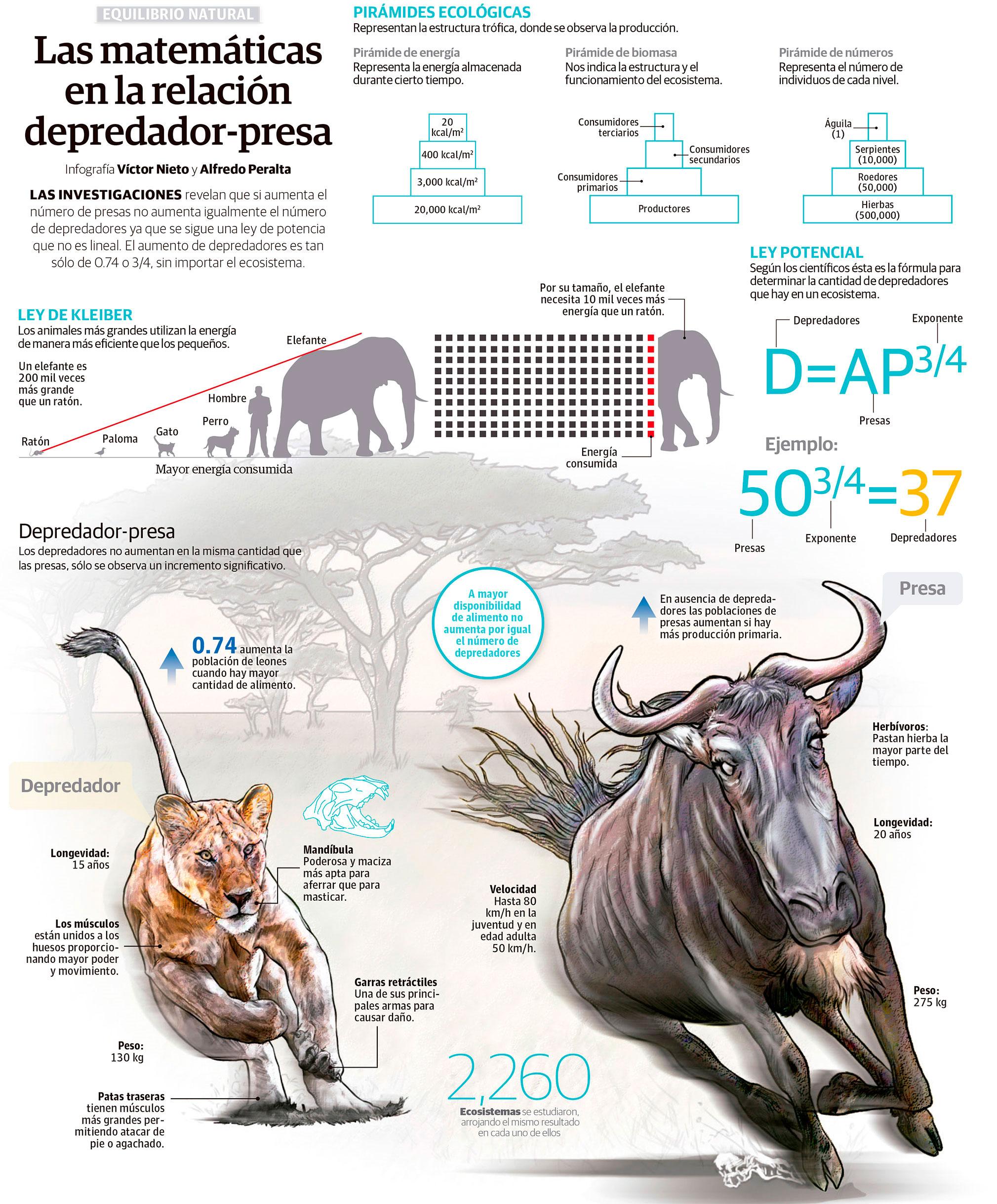 Las matemáticas en la relación depredador-presa