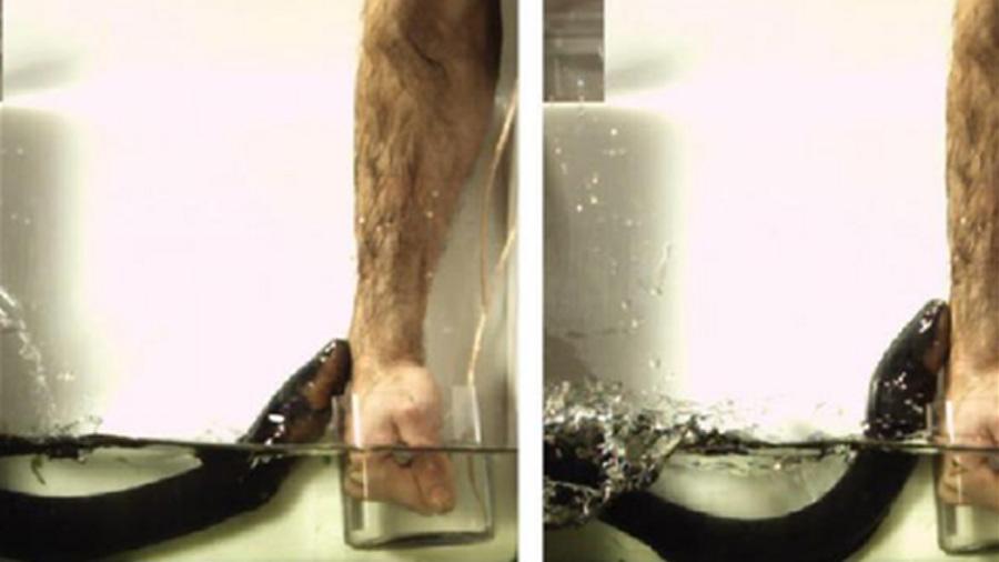 Científico mete la mano a estanque de anguilas y calcula el poder de su descarga