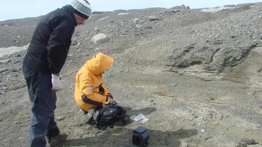 Hallan fósil de pingüino enano de 34 Ma en la Antártida