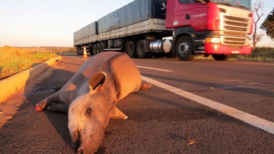 Desarrollan un dispositivo contra los atropellamientos de animales en las carreteras