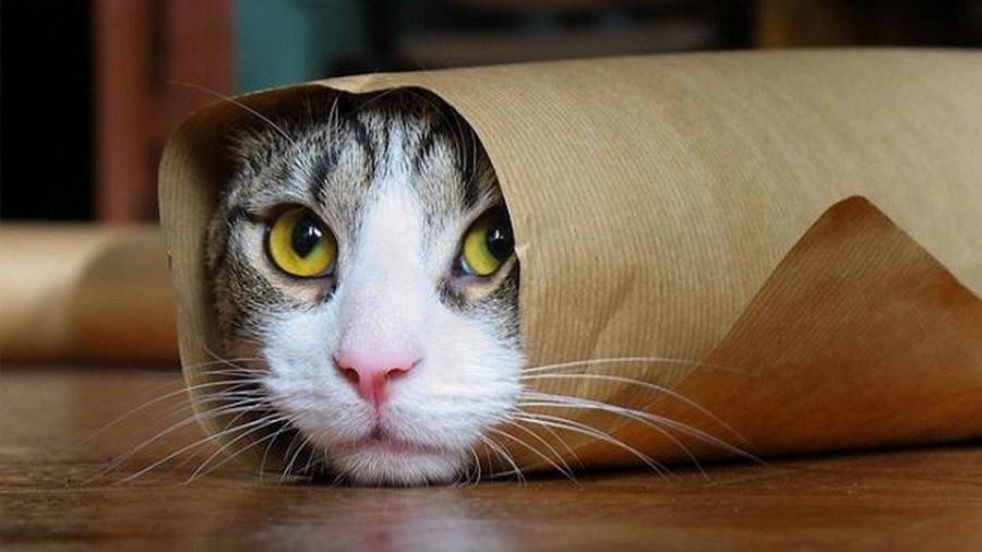 """¿Pueden los gatos ser sólidos y líquidos a la vez? Un francés recibe el """"Nobel"""" por su estudio"""