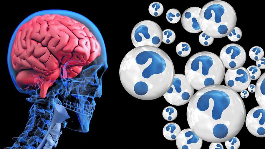 Descubren un nuevo mecanismo de control de la memoria