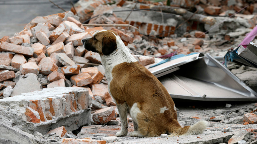 ¿Qué hacemos con nuestras mascotas durante un sismo?