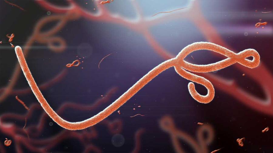 Investigadores descubren que por lo menos 27 virus diferentes pueden sobrevivir en el semen