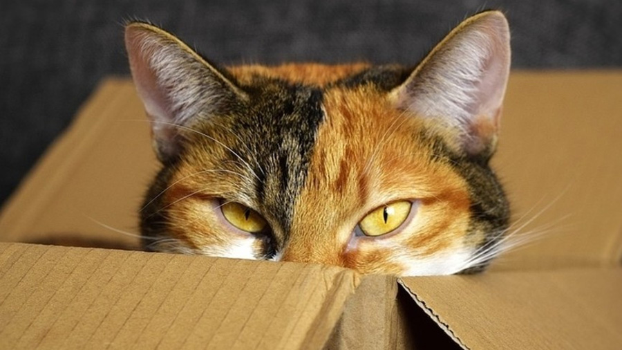 Físicos estadounidenses consiguen convertir iones en 'gatos cuánticos'