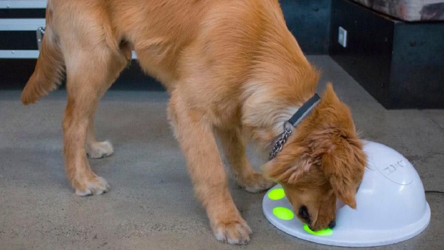 Crean una consola de juego exclusiva para mascotas