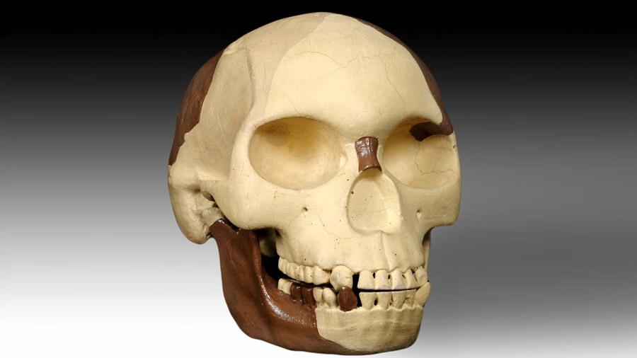 Hombre de Piltdown: El fraude del eslabón perdido de Darwin