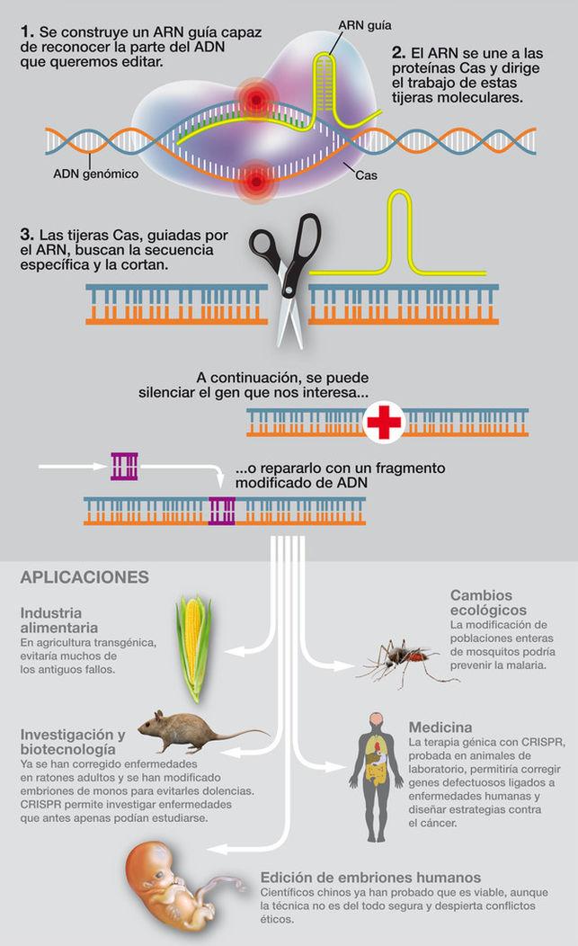 Las 'tijeras de ADN' CRISPR/Cas9